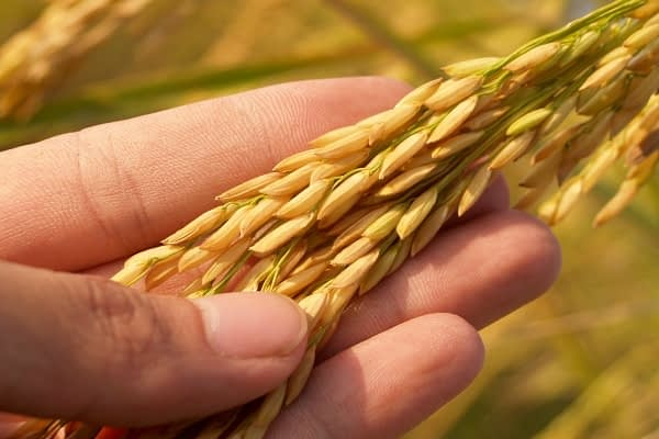 La importancia de la innovación y la tecnología en la agricultura