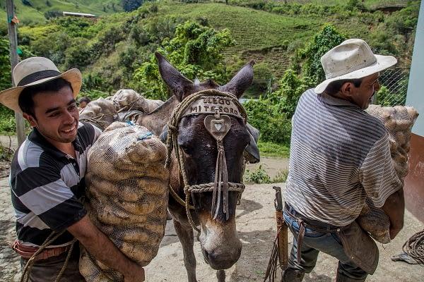 La cotidianidad del campo en el Tolima